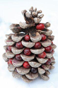 Zelf vogelvoer maken met zaden en vet is leuk om te doen en heel eenvoudig. Bovendien kun je zelf de samenstelling bepalen én de vorm. Wat te denken van een heuse kersttaart als vogeltraktatie? De taart maak je van vet en zaden met sierappeltjes (Malus 'Red Sentinel'). Met hetzelfde materiaal...
