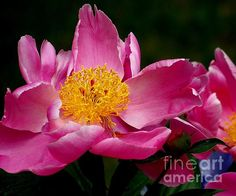 Title: In The Pink Artist: Eunice Miller Medium: Photograph - Photography