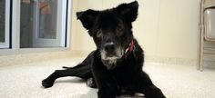 Do you have a place in your heart and home for this sweet dog? She needs you now! ADOPT HER NOW!