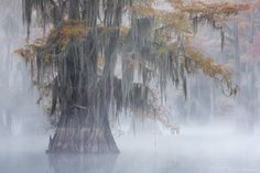 Out of the Mist by David Chauvin on 500px