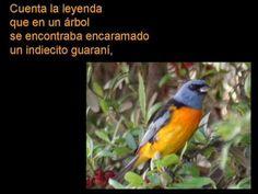 ▶ La Tuna - 10. Pájaro chogüí - YouTube