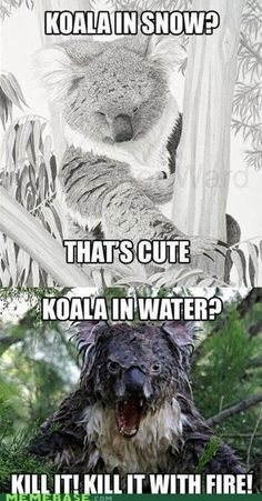 Koala in Water = RUN!