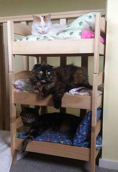 WEB LUXO - PETS: Camas pequenas de bonecas são transformadas em camas para gato