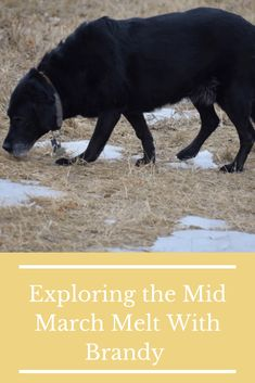Exploring the Mid March Melt With Brandy - So I Was Thinking Open Field, Storytelling, Exploring, March, Dogs, Animals, Animales, Animaux, Pet Dogs