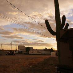 Cactus #KovacsKorner #Arizona #ApacheJunction #Print #Photograph #Sunset