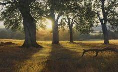 Adiar Payne McCOURTNEY SUNRISE, 15×30 (available at Sugarman-Peterson Gallery, Santa Fe)