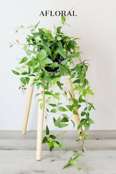 Add some freshness to your home decor without the maintenance! Switch to faux hanging plants for a stunning, realistic look. No sun or watering required. Shop favorite fake plants at Afloral.com. Artificial Indoor Plants, Best Indoor Plants, Outdoor Plants, Indoor Garden, Fake Plants Decor, Hanging Plants, Plant Decor, Potted Plants, Faux Olive Tree