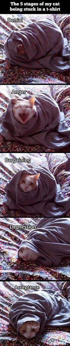 The five stages of a cat stuck in a t-shirt. It's cute but kind of sad at the same time..
