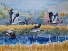 Landebahn (c) ein Kranich Aquarell von Frank Koebsch Aquarelle watercolors cranes