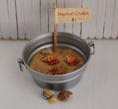 Miniature Hermit Crabs In A Pail With Sand by LittleThingsByAnna Ag Dolls, Girl Dolls, Crab Party, American Girl Diy, Modern Dollhouse, Diy Dollhouse, Mini Things, Easter Table, Doll Crafts