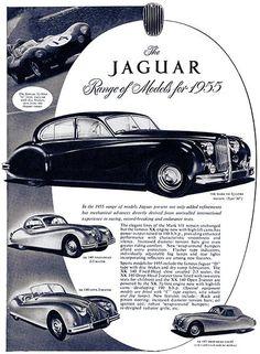 1955 Jaguar Line - Promotional Advertising Poster