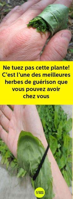 Ne tuez pas cette plante! C'est l'une des meilleures herbes de guérison que vous pouvez avoir chez vous Health Remedies, Natural Remedies, Massage, Health Fitness, Herbs, Horticulture, Wicca, Kiwi, Pesto