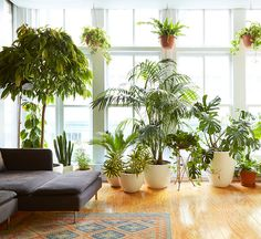 You know you've always wanted a Monstera.