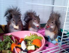 Squirrel salad bar - at first I thought this was super cute; then, I worried that someone was actually keeping these squirrels as pets?