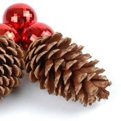 Scented pine cones make an excellent holiday gift.