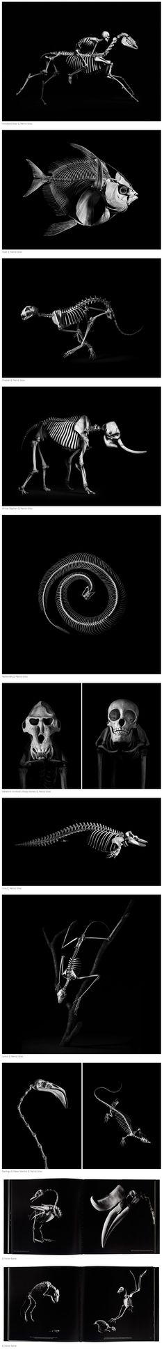 Created in collaboration with the National Museum of Natural History in Paris, Evolution is an extraordinary collection of images by photographer Patrick Gries that tells the visual story of evolution through 300 black and white photos of vertebrate skeletons.
