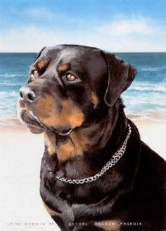 Ocean backdrop, warm summer breeze, and a pensive Rottweiler...what could be more adorable?