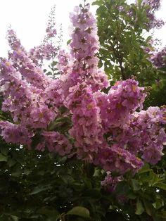 Ohayou gozaimasu.. dan selamat beraktivitas °°¬beautiful flowers¬°°