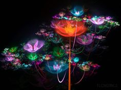 Google Image Result for http://www.wallcoo.net/cartoon/fractal_art_wallpapers_03/images/Creative_Fractal_Art_Flowerings_75.jpg