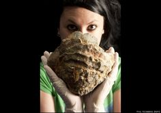 This giant oyster turned up in the Solent, a strait separating mainland England from the Isle of Wight, according to the Daily Mail, and it dates back 100 million years.