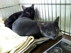 Meet Mel and Buck, 9-month-old siblings whose heartbreaking story made local headlines just after Christmas. The pair are two of the Sweet Sixteen, a group of cats and kittens dumped by the side of a quiet road in Manchester, N.H., on one of the coldest days of the year. The litter box-trained kitties would do best in a home that has a small room where they can gradually adjust to their surroundings. http://bit.ly/wDitwh