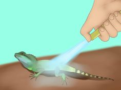 How+to+Take+Care+of+a+Chinese+Water+Dragon+--+via+wikiHow.com