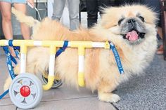 Diy Wheelchair Building Cl Makes Pets Hy
