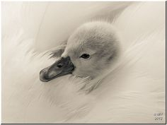 Feather bed | Flickr - Fotosharing!