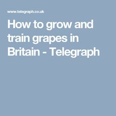 How to grow and train grapes in Britain - Telegraph