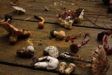 Slow Food Seattle: Talking Mushrooms with Becky Selengut & Langdon Cook Nov. 3 at Pike Place Market.