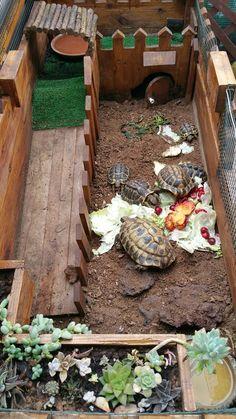 Tortoise House, Tortoise Habitat, Tortoise Table, Turtle Enclosure, Tortoise Enclosure, Turtle Care, Pet Turtle, Animals And Pets, Funny Animals