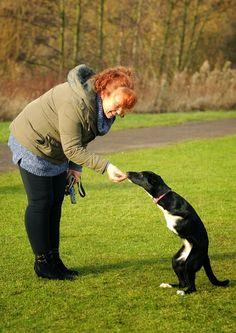 Amazing Success Story of a Dog Roux who works like a Kangaroo