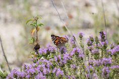 in eleonas hotel's garden #butterfly,#garden,#flowers