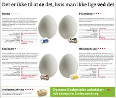 """Æggeguide: """"De fleste af os ved, at buræg kommer fra høns i små bure, men når man skal forklare forskellen på skrabeæg, frilandsæg og økologiske æg bliver det straks sværere at forklare forskellene - derfor har vi lavet denne æggeguide, så alle hurtigt kan se, hvor meget dyrevelfærd man får for sine penge, når man køber æg"""""""