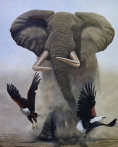 Satao (poached in Artist Jonathan Truss Wildlife Paintings, Wildlife Art, Animal Paintings, Animal Drawings, Elephant Love, Elephant Art, African Elephant, Elephant Photography, Animal Photography