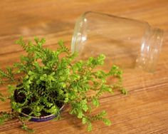 Hello How to Make a Tiny Terrarium and Macrame Hanger - Life on the Balcony Succulents Garden, Container Gardening, Crafts To Make, Hanger, Diy Projects, Herbs, Jar, Crafty, How To Make