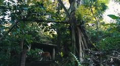 【环保】美丽少妇全家住进原始森林,做了件惊天动地的事,所有人都点赞! 二更