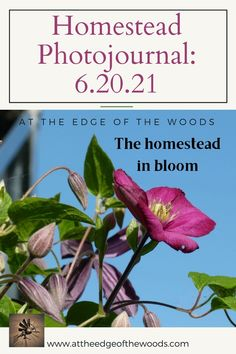 The homestead in bloom Clematis, Permaculture, Homesteading, Bloom, How To Plan, Landscape, Plants, Scenery, Plant