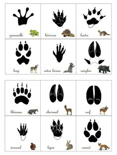 Empreintes animaux de la forêt animals silly animals animal mashups animal printables majestic animals animals and pets funny hilarious animal Animal Activities, Montessori Activities, Activities For Kids, Survival Life Hacks, Survival Skills, Animals Tattoo, Animal Footprints, Animal Tracks, Camping Hacks