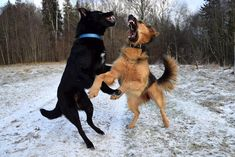 How to Safely Break up a Dog Fight This post is part 3 of a 3-part series on dog park safety. In the first post of this series we covered the essentials you need to know when planning a trip to the dog park. In part 2 we shared our top tips for keeping your dog safe while he's at the park. In this final post in the series, we'll show you what to do if the worst should happen and your dog becomes involved in a fight