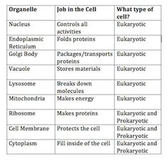 essay on bacterial cell wall composition Describe differences between viral and bacterial  research assignment on classes of the antimicrobial agents (essay  such as destroying the cell wall of the.