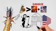 Termite Damage, Termite Control, Hampton Roads, Mud, The Hamptons, Virginia, Trust