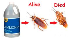 How To Get Rid Of Cockroaches Permanently