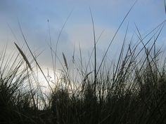 Dune-grass with clouds