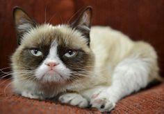 Nestlé Purina signs endorsement deal with Grumpy Cat : Business