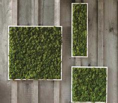 Living Wall Art preserved plants: mood moss, sheet moss, wood disks, artificial