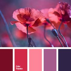 Bright combination of two shades of pink and light purple with rich burgundy and aubergine create a colourful range of festive mood. These colours are suit.