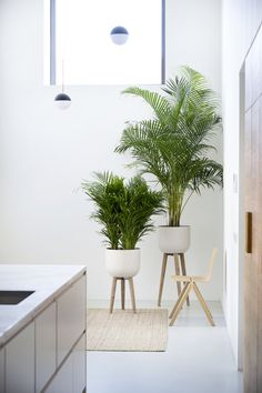 Your ticket to the tropics: the Areca palm is straight out of the jungle, and one of the best air purifying plants. It's perfect for ushering some hot holiday memories into your home. Palm House Plants, House Plants Decor, Palm Plants, Plantas Indoor, Best Air Purifying Plants, Indoor Palms, Office Plants, Boho Living Room, Living Rooms