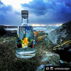 What a fab pic from @wildislandgin, a brand new Scottish island Gin.  I haven't tried this one yet, I need to find some! Here is their haiku: ・・・ Haiku for a Wild Island Day- Ferry is cancelled, Waves are crashing on the shore, Time to have a gin 🍸  Fun fact, my family visited Colonsay when I was about 12/13 and I won the Haiku competition in the Colonsay News!  Smell the sweet flowers of Colonsay, the island of beauty and peace.  Does everyone on Colonsay love Haiku..?