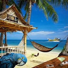 27 Best Margaritaville Wallpaper Images Bing Images Coast Beach Art
